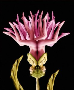 Flowers from Human Bodies photographs by Cecelia Webber
