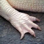 7 famous albino animals