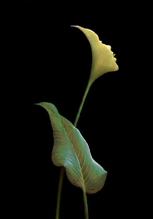 A white calla and a silhouette of a woman. Fabulous Illusions by Mexican artist Octavio Ocampo