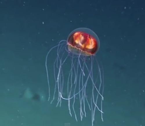 The Atlantic Ocean bottom alien creatures