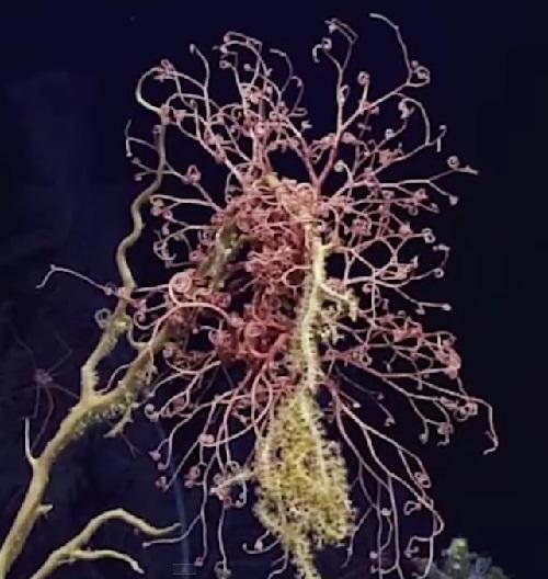Tree-like creature of the Atlantic Ocean