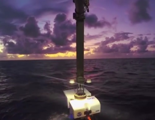 America's Ocean Exploration Team have filmed on video a few amazing new species
