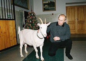 White goat and vladimir Putin