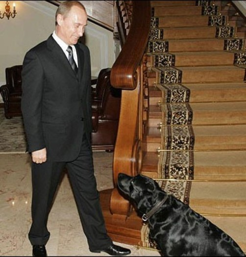 Loyal friend of Vladimir Putin, black Labrador