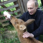Happily feeding animal, president Vladimir Putin