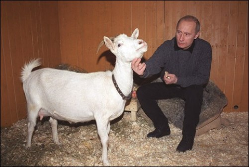 Communicating with white goat, Vladimir Putin