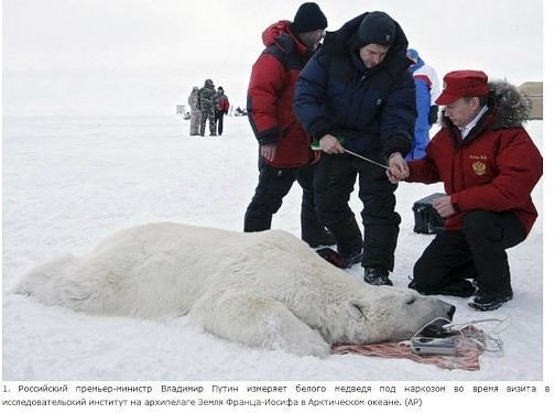 Here, Vladimir Putin measures the polar bear before anesthesia during a visit to the research institute on the Franz Josef Land archipelago in the Arctic Ocean