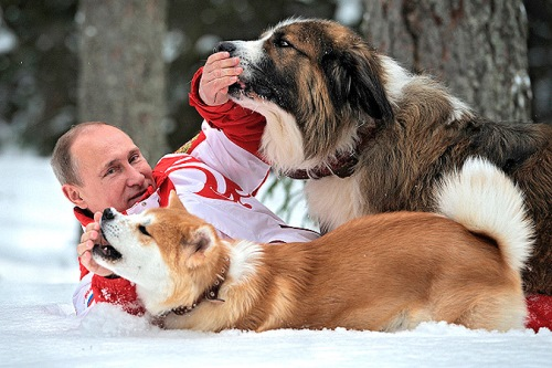 Winter walk with favorite dogs, Animal lover Putin