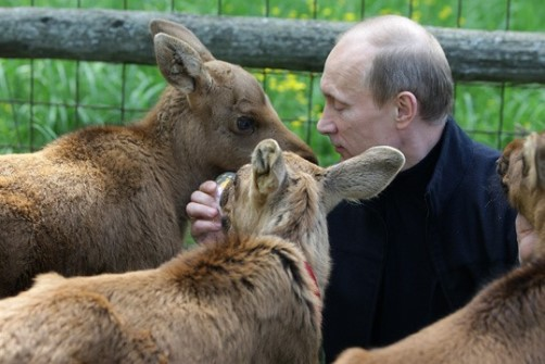 Feeding animals Vladimir Putin