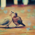 A couple of doves