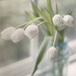 Full of beauty and softness photography by Claire Brocato