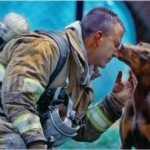 Rescued by men animals