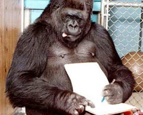 The most prolific and sophisticated of the animal artists. The sign language-speaking gorilla, Koko, is famous for her sensitive artwork, as is her male companion, Michael