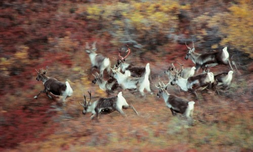 Series 'Animals in motion' by American nature photographer Art Wolfe