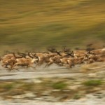 Wild Animals in Motion by American nature photographer Art Wolfe