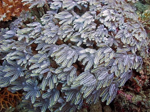 Stunning coral polyps