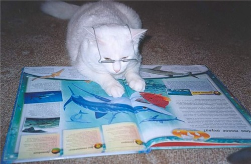 A cat's field of vision is about 200 degrees