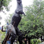 Impressive dinosaur made from recycled metal. Work by Tom Samui