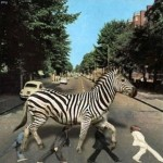 Zebra crossing the Beatles. Funny illustration by Canadian animation artist Sheharzad Arshad