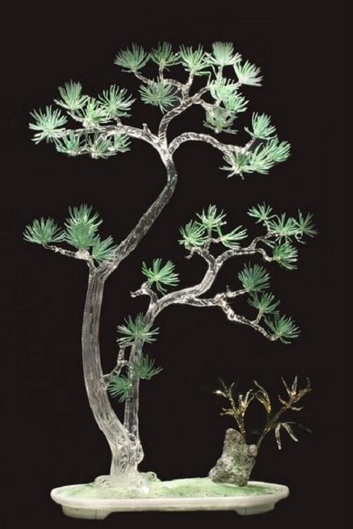 Bonsai. Korean pine