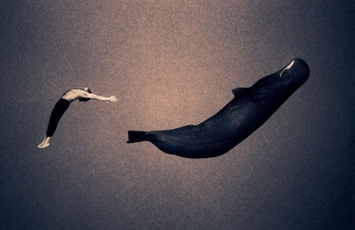 Human beings and animals by Gregory Colbert