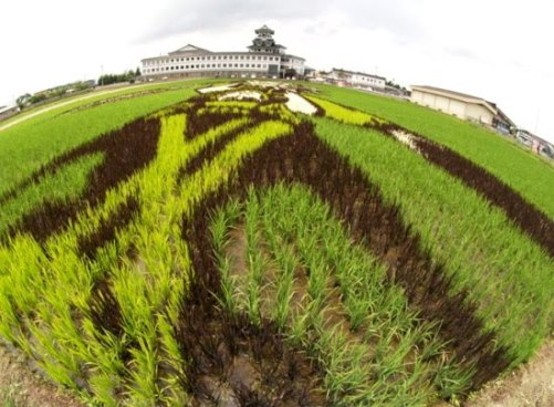 Archaeological exploration led to a realization that rice had been grown in the area for more than 2000 years. To honor this history, the villagers started a rice field behind the town hall. With the paddy as a canvas, the villagers cultivated and used four different types of heirloom and modern strains of rice to create a giant picture in the field. To allow viewing of the whole picture, a mock castle tower 22 meters high was erected at the village office. In 2006, more than 200,000 people visited the village to see the art.