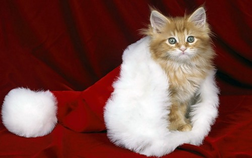 Pets on Christmas