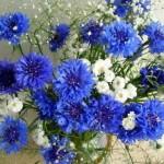Cornflowers Sapphire color