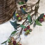 Mistletoe Viscum