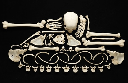 "Creative project ""Stop Violence"". Art Made From Human Bones. Photographer Francois Robert, Switzerland"