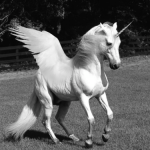 Unicorn want-to-believe creature