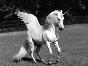 Unicorn want-to-believe creature