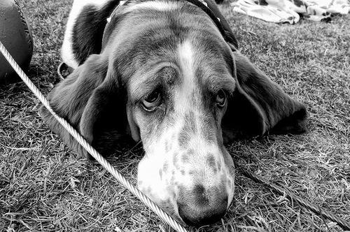 Dog's sadness