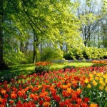 Keukenhof, Netherlands, and is the world's largest flower garden