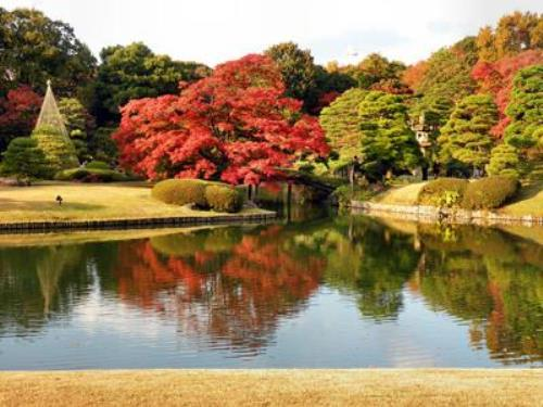 Rikugien Garden, Tokyo, Japan. The park consists of a small pond, trees, and a hill