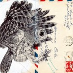 Drawings on envelopes by Mark Powell