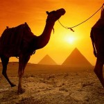 Interesting facts about Camels