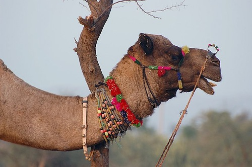 Decorated with beads Camel