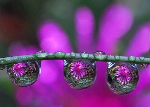 Droplets photography by Dmitry Dolivo-Dobrovolsky