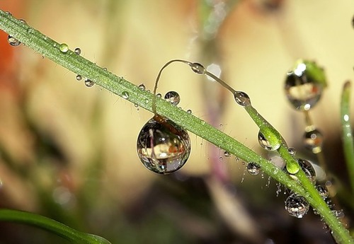 Stunning macro. Droplets of water by Russian photographer Dmitry Dolivo-Dobrovolsky