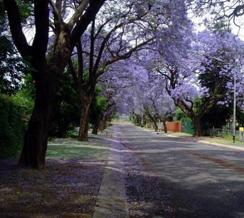 the huge number of trees planted in streets, parks and gardens