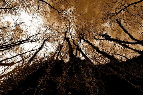 Autumn trees. photographer Gilles Ferrier
