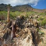 Unique Socotra island