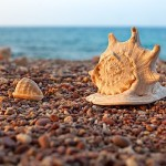 Seashells of the Socotra island