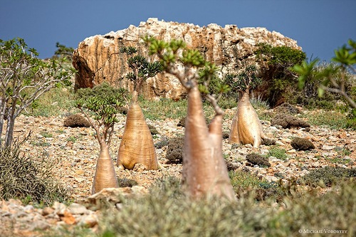 Typical landscape of the Socotra island