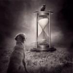 Beautiful photoart by Hungarian self-taught photographer Sarolta Ban
