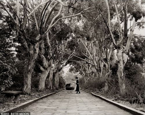Huge branchy tree