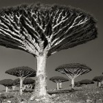 "Rare and exotic trees in the series ""Portraits of the time"". Photography by Beth Moon"