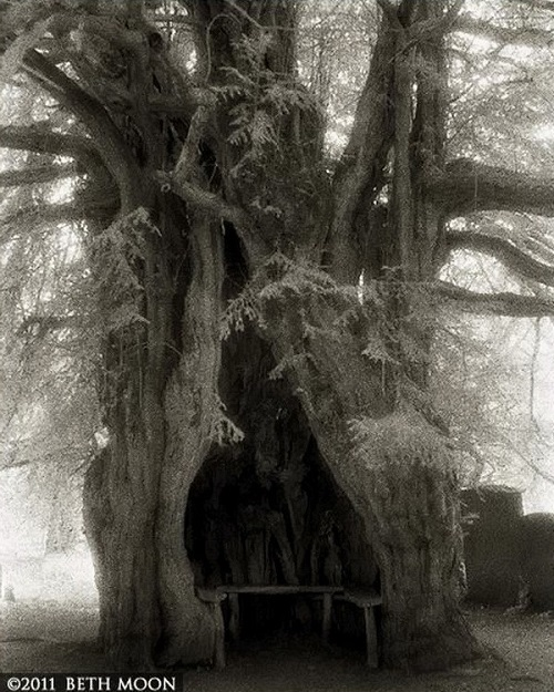 Amazing old tree. Portraits of the time. Photography by Beth Moon
