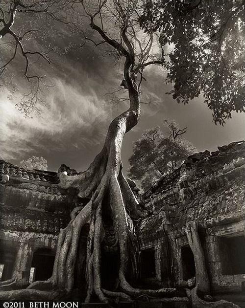 Strangling Trees of Angkor Wat in Cambodia